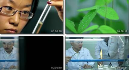 农业科研 农业科技 实验室实拍片段
