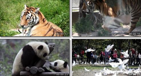 野生动物园实拍片段