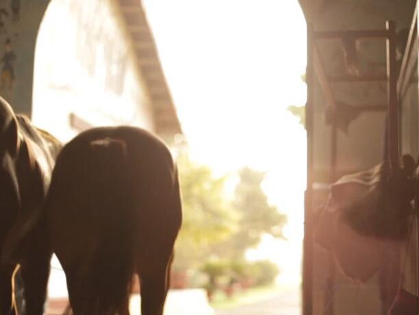 群马奔跑实拍片段