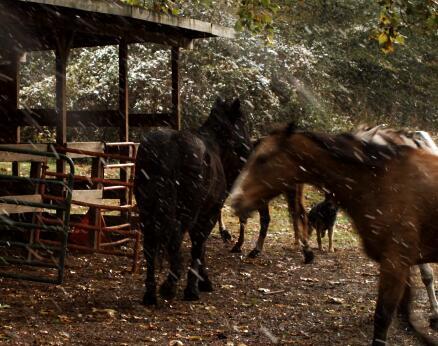 雪地奔跑的马实拍片段