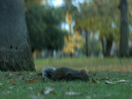 可爱的小松鼠实拍片段