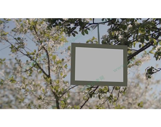 唯美的自然树枝头悬挂相册展示AE模板