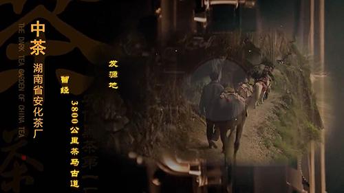 中茶黑茶园形象宣传片视频素材